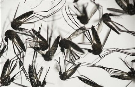 UN health chief: Zika virus is 'spreading explosively'